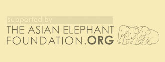 Asian Elephant Foundation