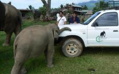Mobile Elephant Clinic in Laos