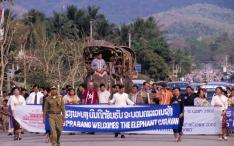 Elephant Caravan arrives in Luang Prabang 2
